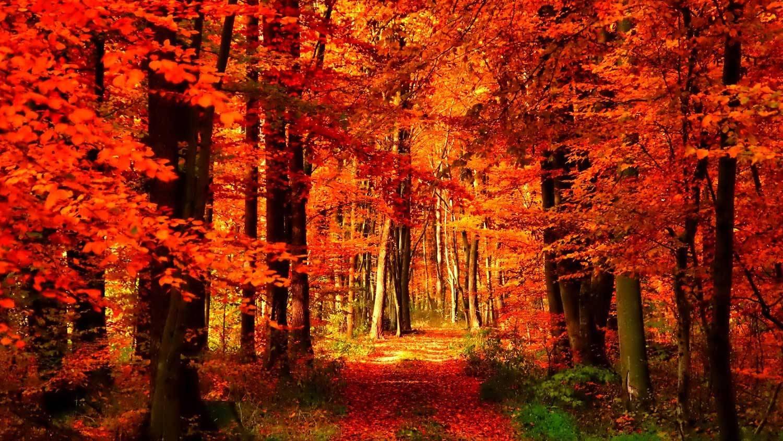 Shisha Tabak für den Herbst